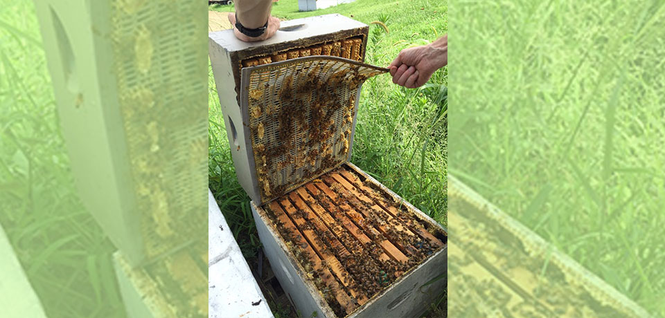 Honey Farm: A chilling visit to a 100-year-old bee's kingdom